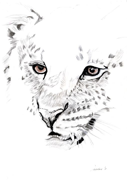 leopard - Red Heart Art