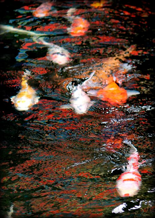 Koi Pond - 5 Angels Photography