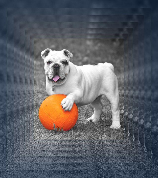 Dogs 7. - Alexandra Luiza Dahl