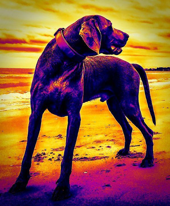Dogs 15. - Alexandra Luiza Dahl