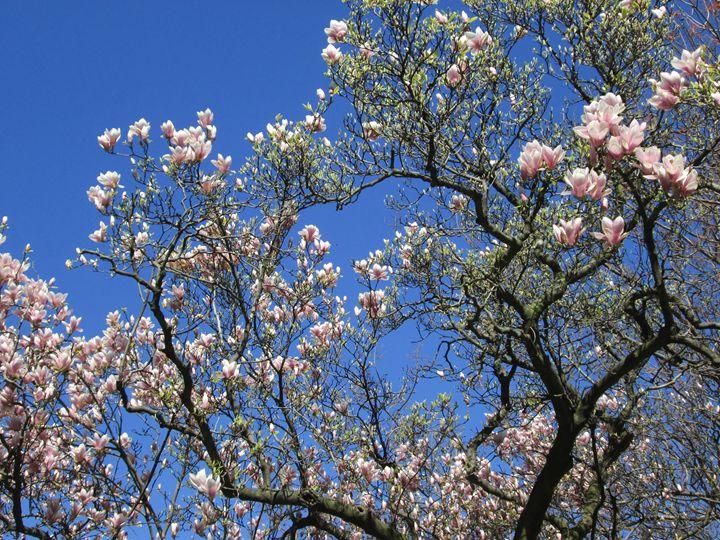 Spring blossom 2 - Alexandra Luiza Dahl