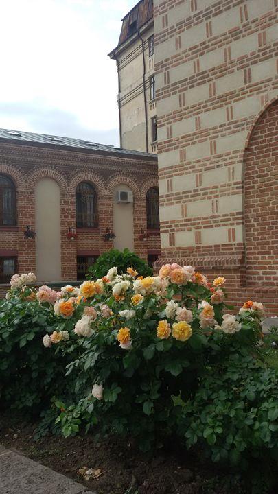 Yellow roses garden - Alexandra Luiza Dahl