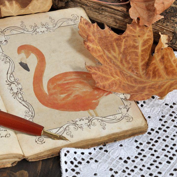 Flamingo memories - Alexandra Luiza Dahl