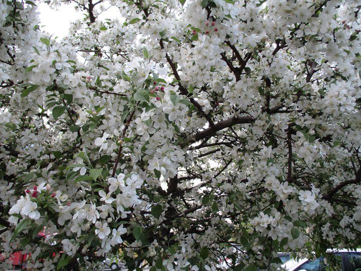 Into the spring 1 - Alexandra Luiza Dahl