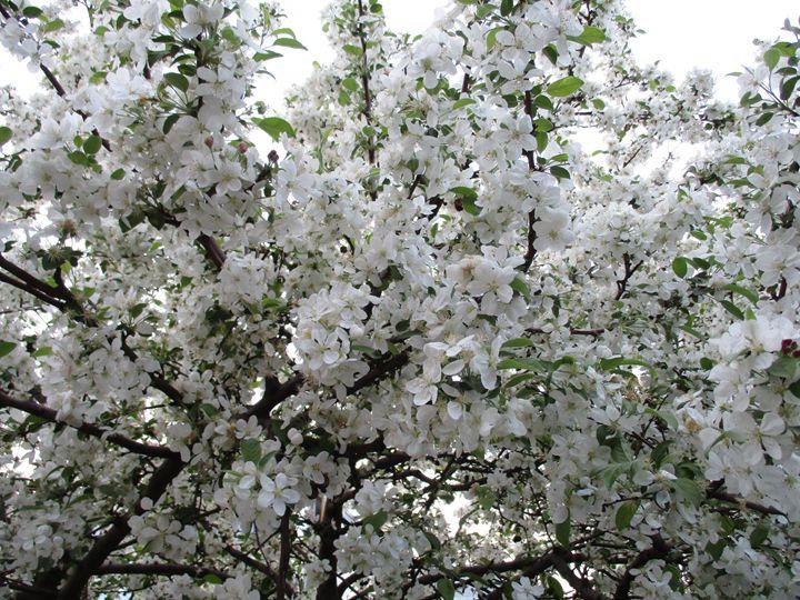 Into the spring 2 - Alexandra Luiza Dahl