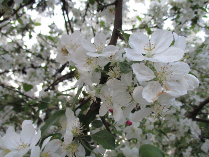 Into the spring 3 - Alexandra Luiza Dahl