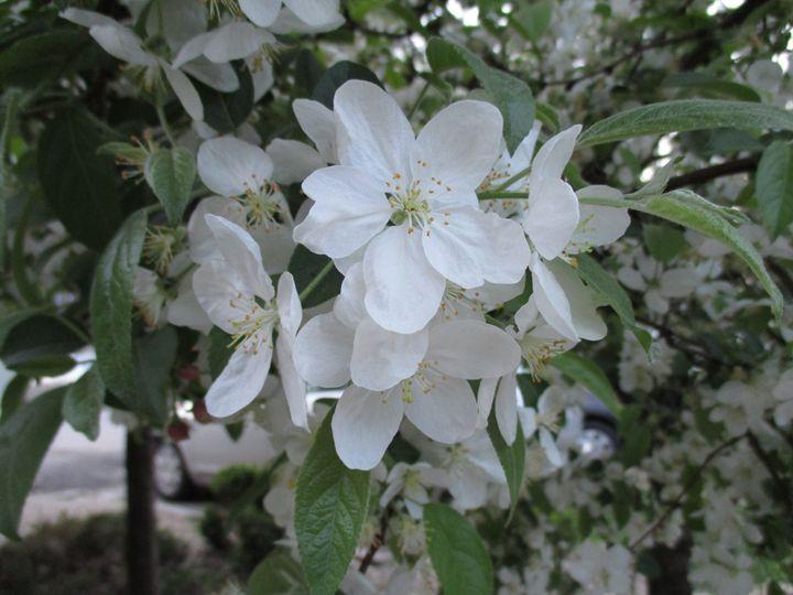 Into the spring 8 - Alexandra Luiza Dahl