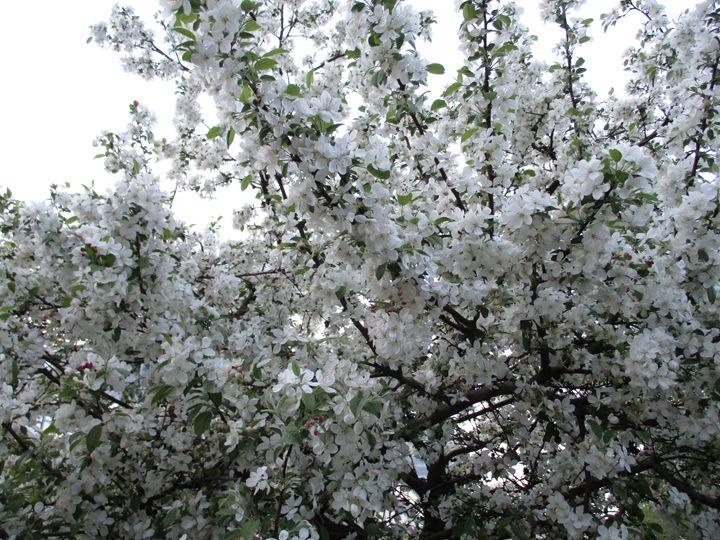 Into the spring 11 - Alexandra Luiza Dahl