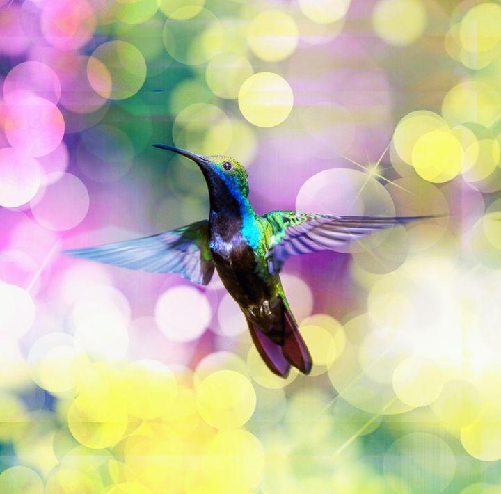 Flying hummingbird 1. - Alexandra Luiza Dahl