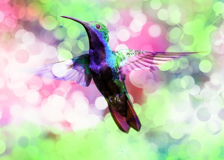 Flying hummingbird 2. - Alexandra Luiza Dahl