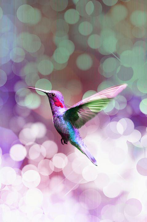 Flying hummingbird 5. - Alexandra Luiza Dahl