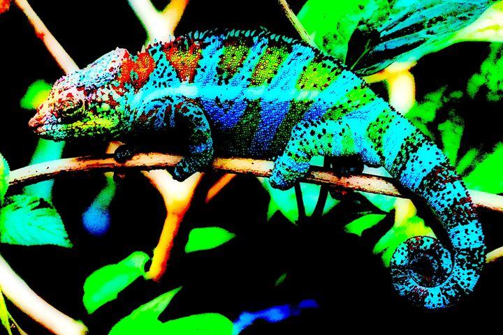 Colored iguana 1. - Alexandra Luiza Dahl