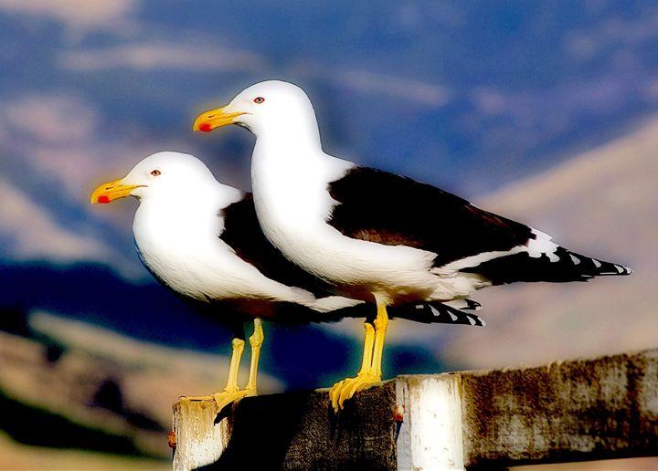 Seagulls - Alexandra Luiza Dahl