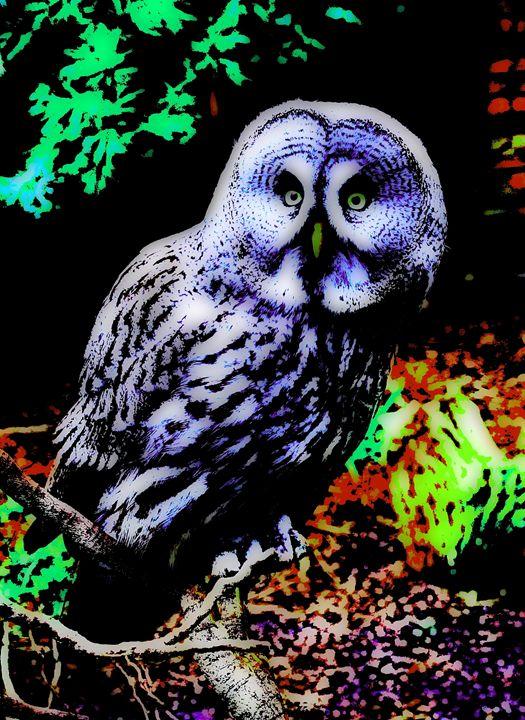 Colorful owl 2. - Alexandra Luiza Dahl