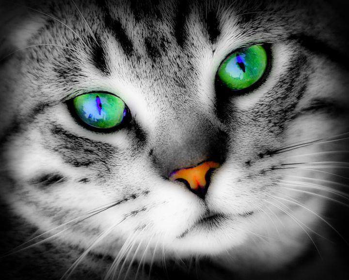 Cat with deep green eyes - Alexandra Luiza Dahl