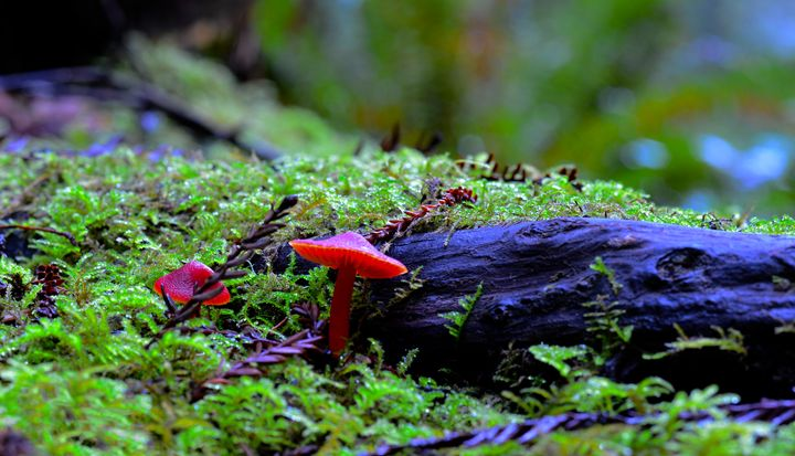 Red Mushroom - J.A.G. Photography