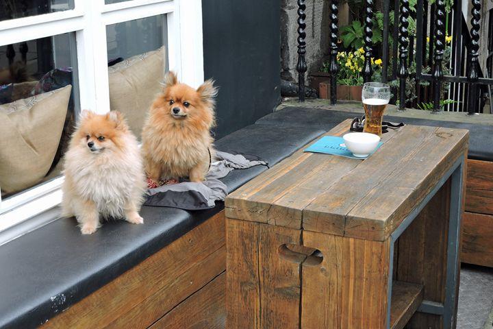 Pomeranians Sharing A Beer (color) - William Slider