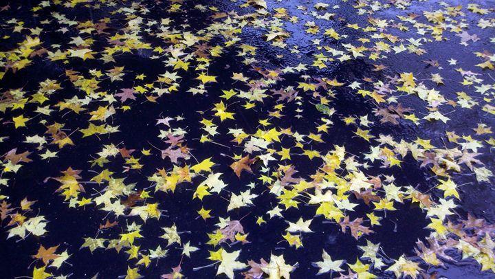 Floating Yellow Leaves - William Slider