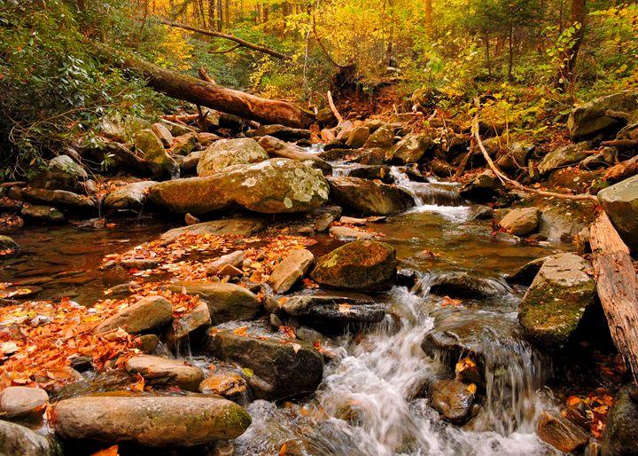 Creek with Fall Leaves in Smokies - William Slider