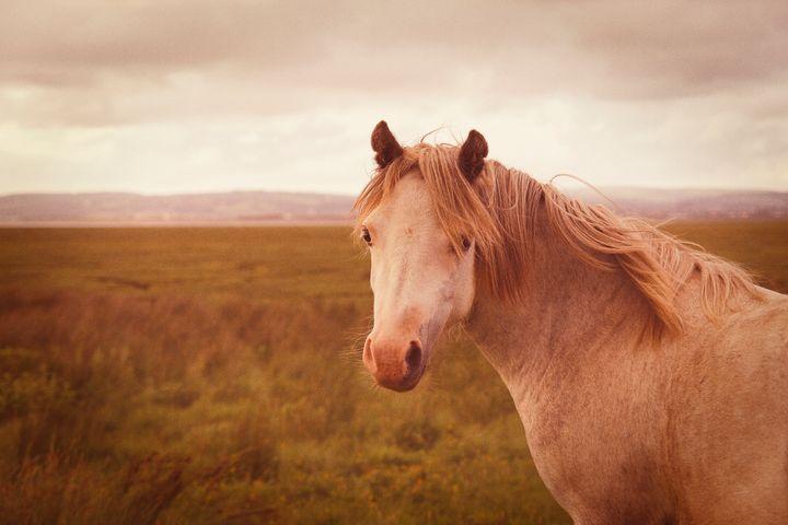 Wild horse - Steve Ball