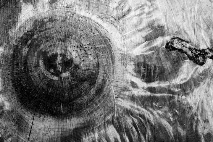 Tree cut - Steve Ball
