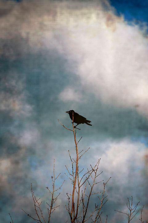 Crow tree - Steve Ball