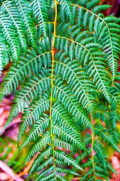 Beautiful Bright Green Fern - J & A Photography