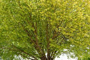 Close up of Beautiful Tree
