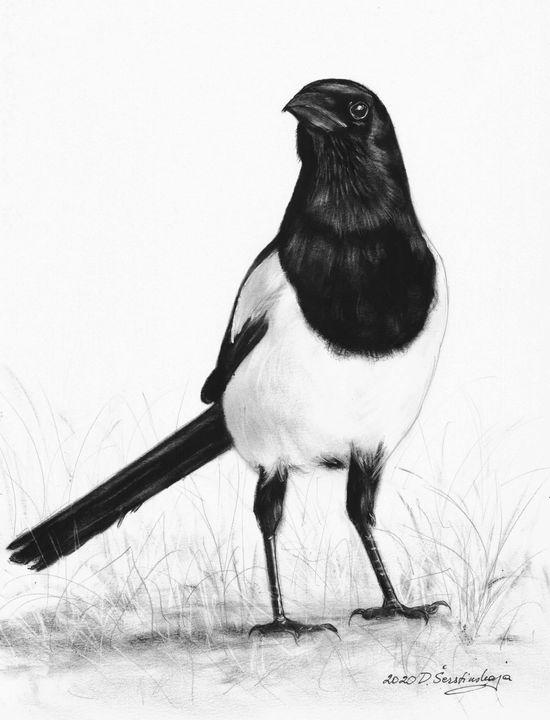 Magpie - Animalpaintings