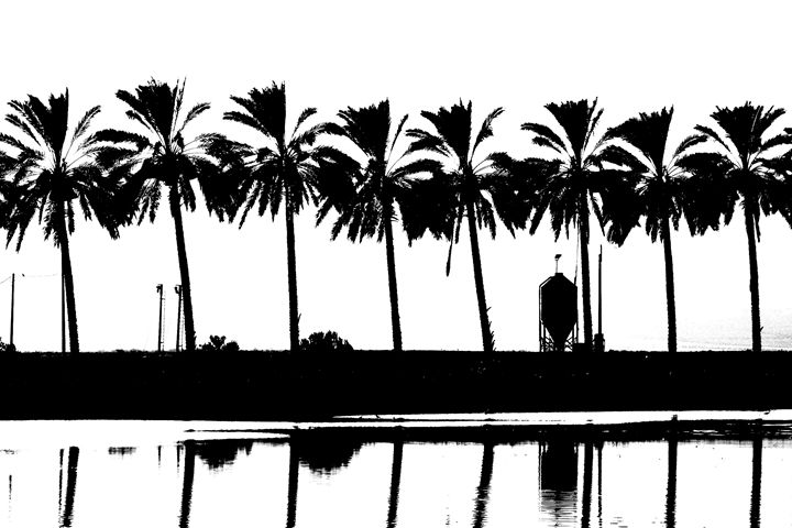silhouette of palm trees Israel - PhotoStock-Israel