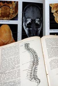 An open Anatomy text book - PhotoStock-Israel