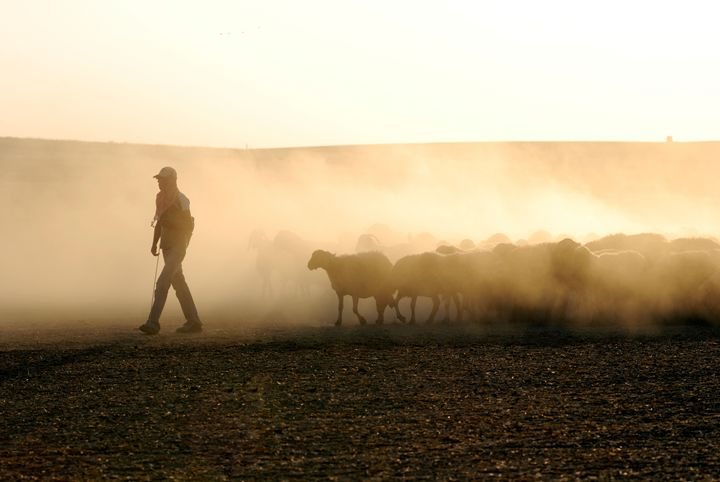 Israel, Negev, Bedouin shepherd - PhotoStock-Israel