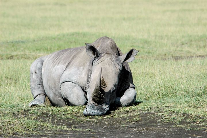 Rhinoceros, lake naivasha, Kenya - PhotoStock-Israel