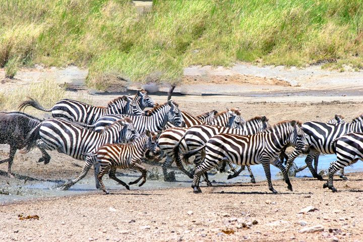 annual migration Tanzania - PhotoStock-Israel