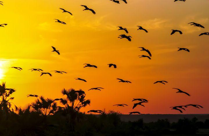 Africa, Kenya, birds at sunset - PhotoStock-Israel