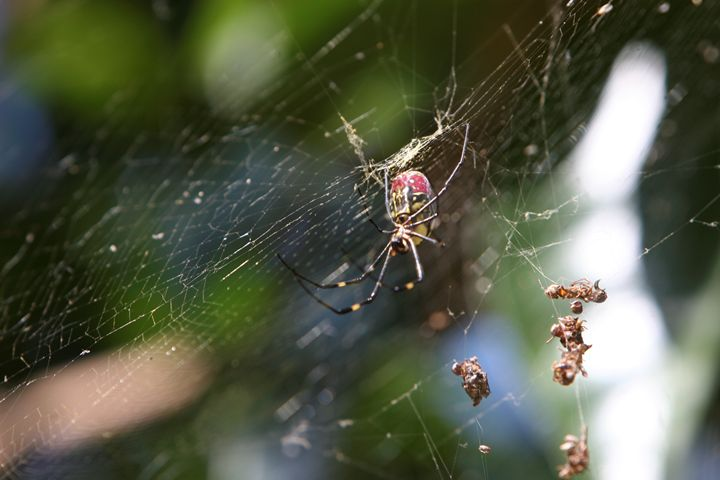 Spider web close up - PhotoStock-Israel