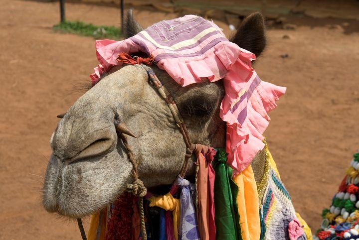 India, Rajasthan, chittorgarh - PhotoStock-Israel