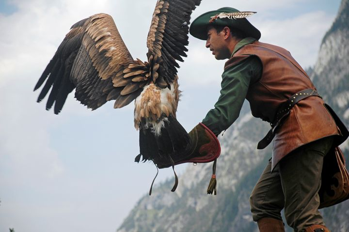 Birds of Prey Show - PhotoStock-Israel