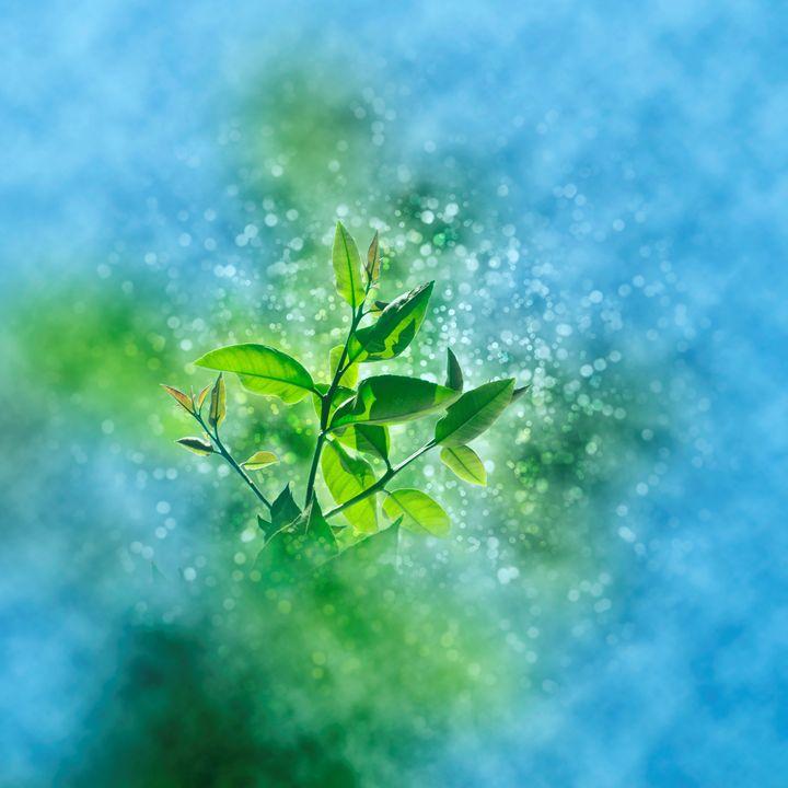 fresh growth of healthy green leafs - PhotoStock-Israel