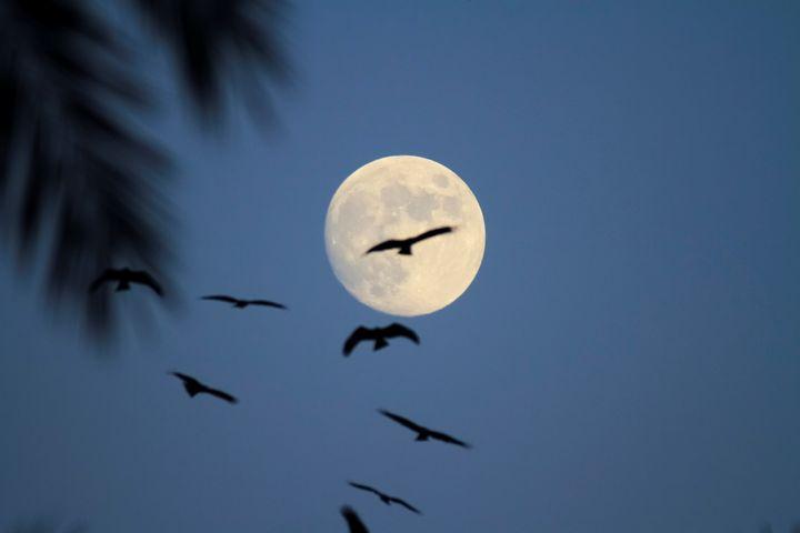 birds on full moon - PhotoStock-Israel