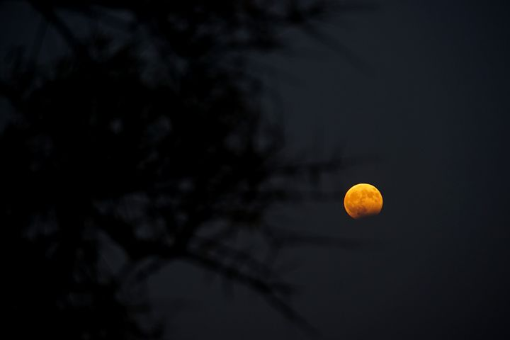 Rising Moon - PhotoStock-Israel