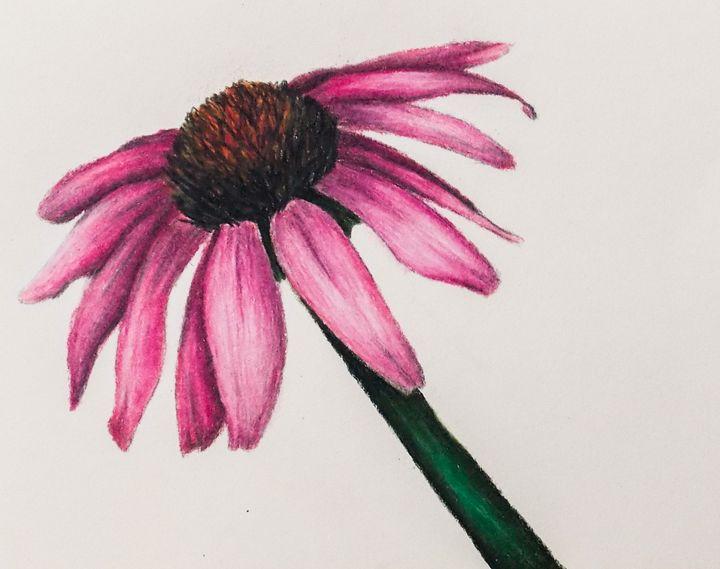 cone flower - Katie Golabowski