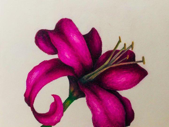 lily - Katie Golabowski