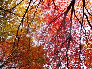 Vivid Trees