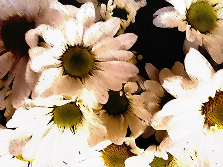 Daisy flowers - White - CLA