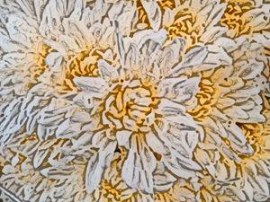 Chrysanths or mums - CLA