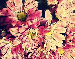 Daisy flowers - Pink - CLA