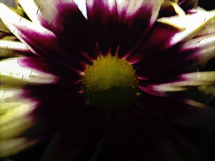 Daisy flower - Purple and white - CLA