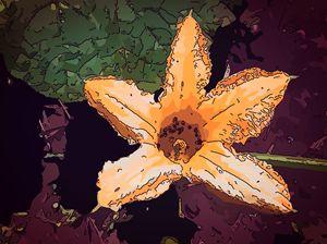 Cucurbita flower -  Orange - CLA