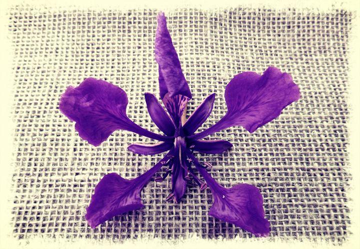 Flamboyan flower - CLA